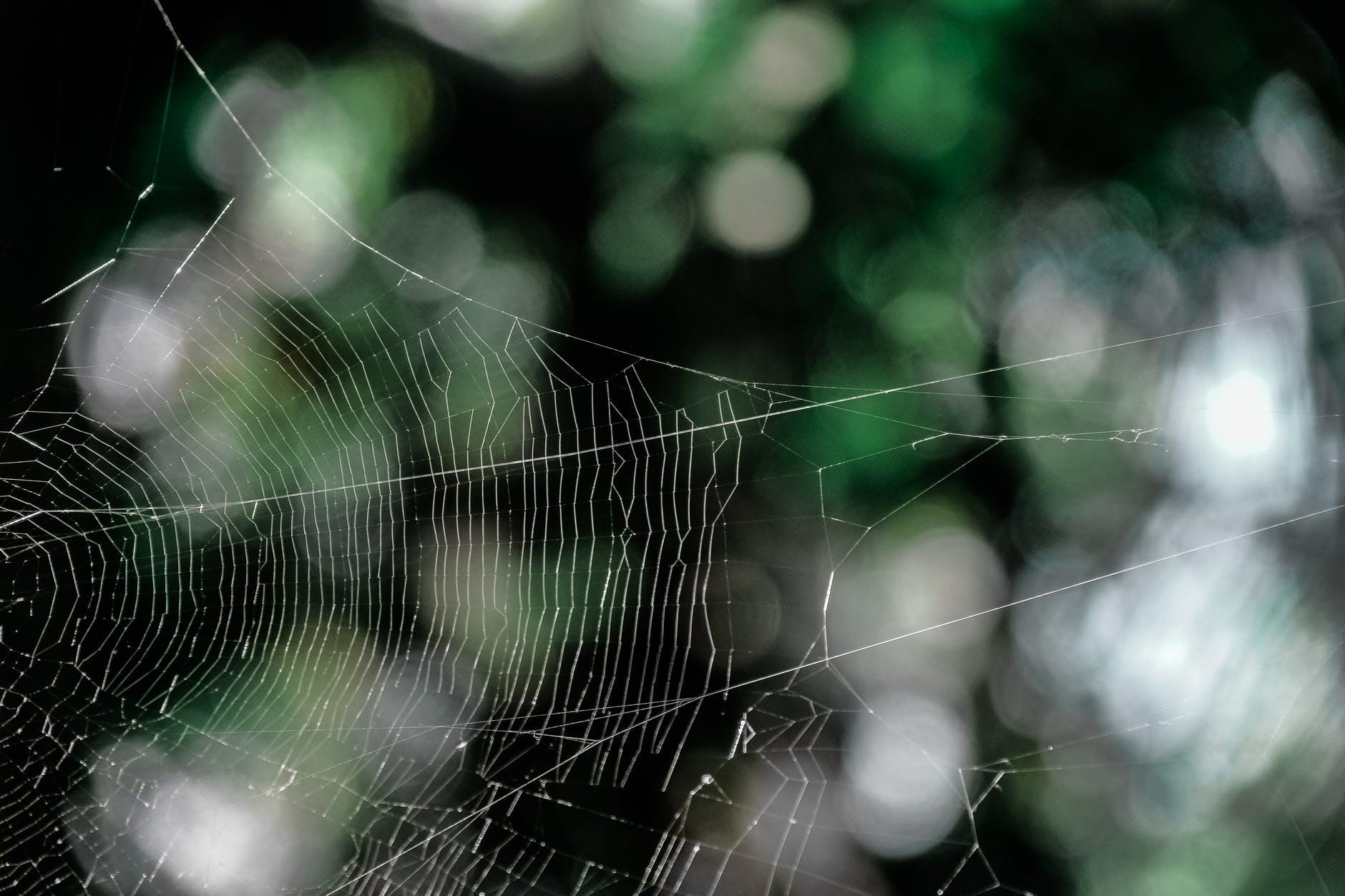 pattern cobweb spiderweb spider web